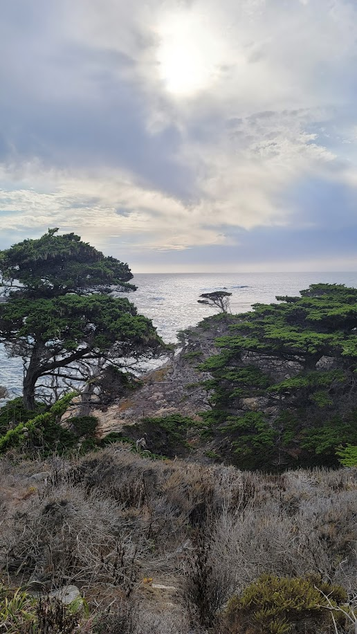 Cypress trees and sunset over Pacific ocean at Point Lobos