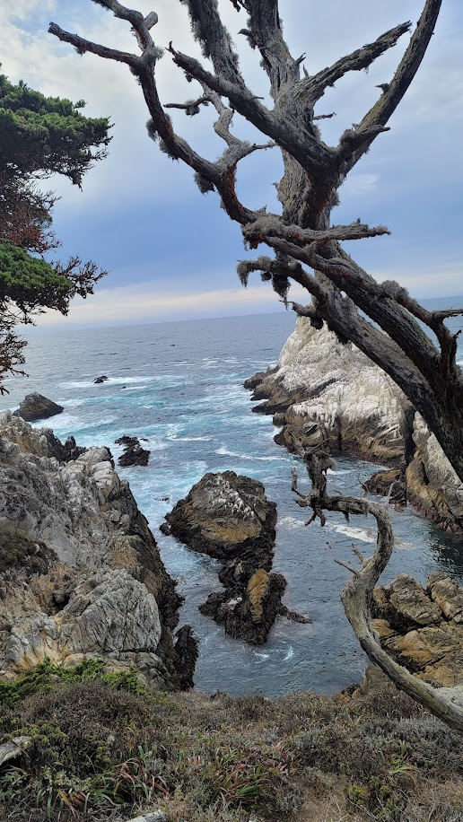 Blue water, brown rocks and cliffs, and mossy tree branches at Point Lobos